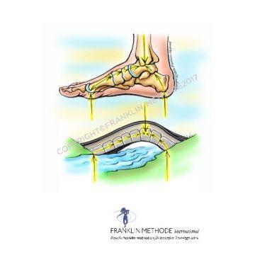 30. bis 31.03.19: Franklin-Methode: Fitte Füße, Knie und Hüfte und entspannte Schultern und Nacken nach der Franklin-Methode®